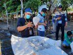 Kementerian Kelautan dan Perikanan (KKP), Lepasliarkan Puluhan Ribu Benih Lobster di Banyuwangi